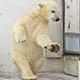 tanssiva karhu puhuu