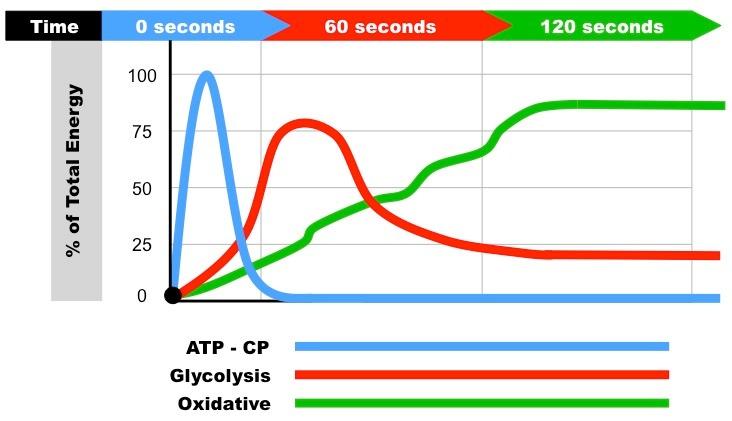 Suorituksen maksimikestot alaktisella, laktisella ja aerobisella lihastyöllä vaihtelevat. Alaktinen on tehokkaimmillaan minuutin kestoisessa suorituksessa.